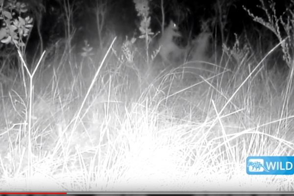 Motion sensor camera traps  – a valuable tool in ecology
